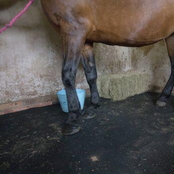 Tapis d'écurie Tapis en caoutchouc Tapis de box pour chevaux Tapis de box Paddock