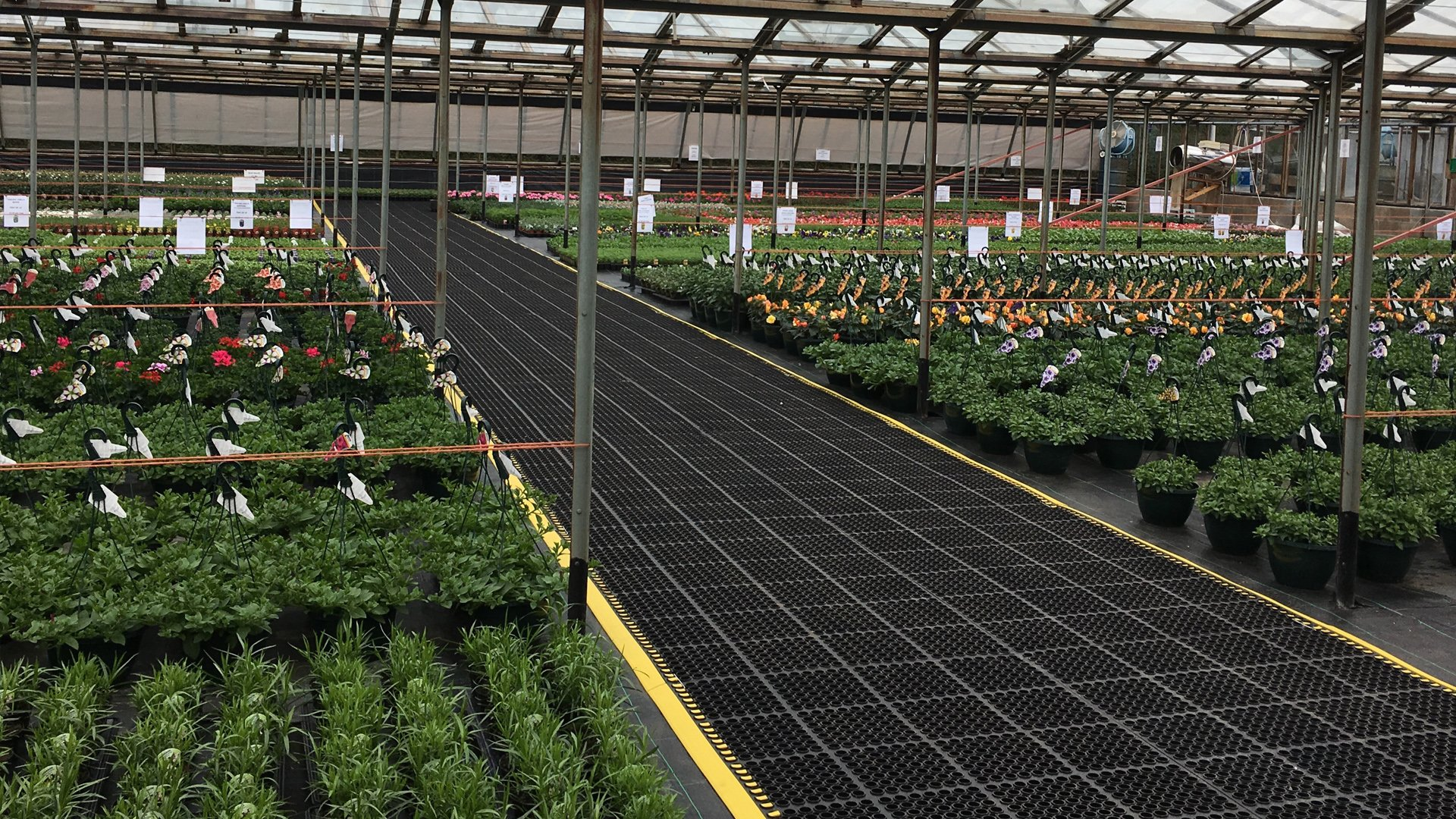 COBAdeluxe for Clingo Plant Nursery