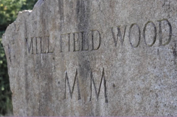 Mill Field Wood